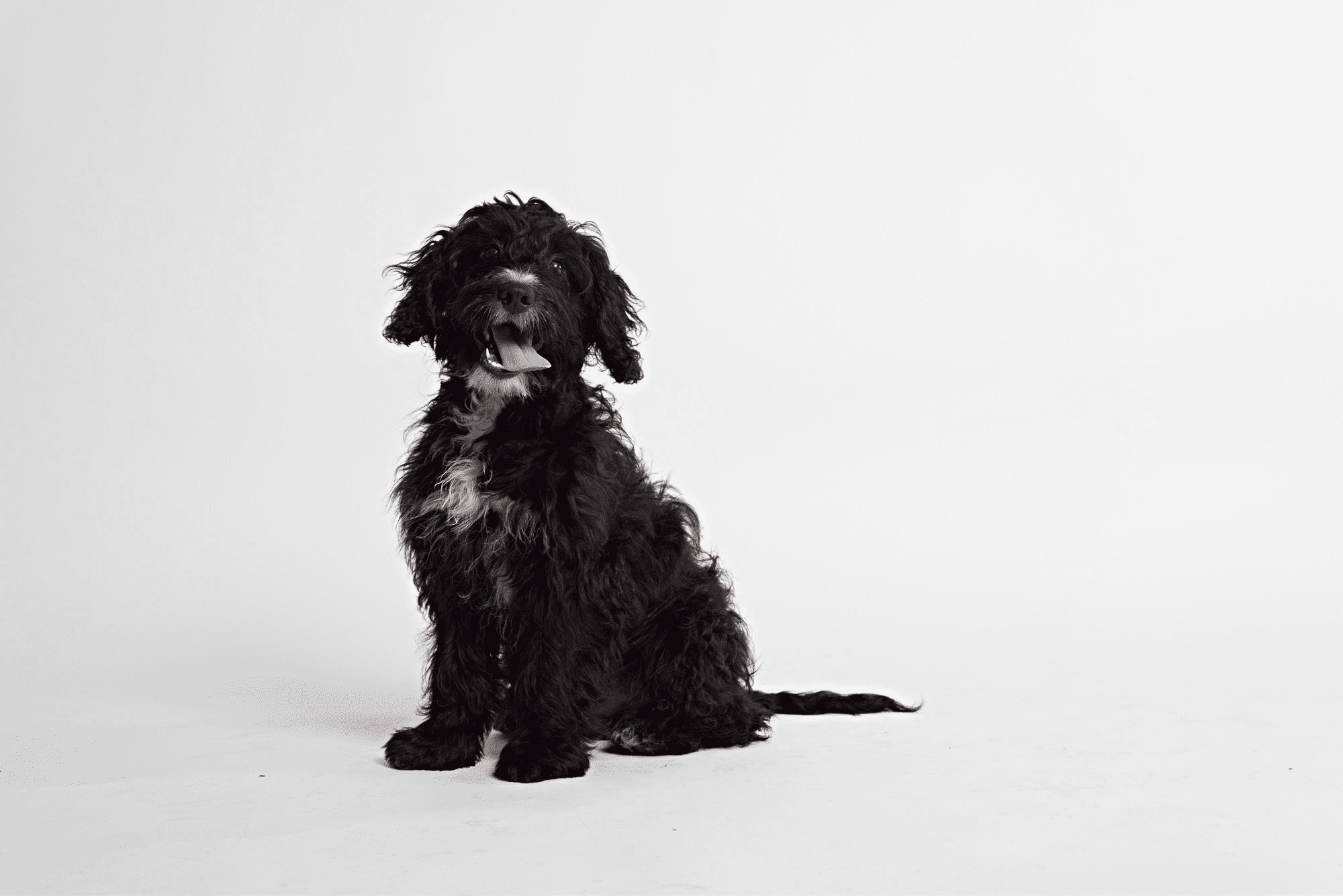Say 'hello' to Max, our Evogen Professional furry friend